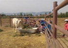 Alumnado de Primaria visita la granja